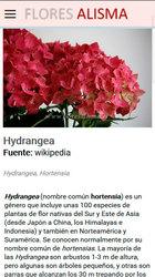 Versión móvil de Web de Flores Alisma